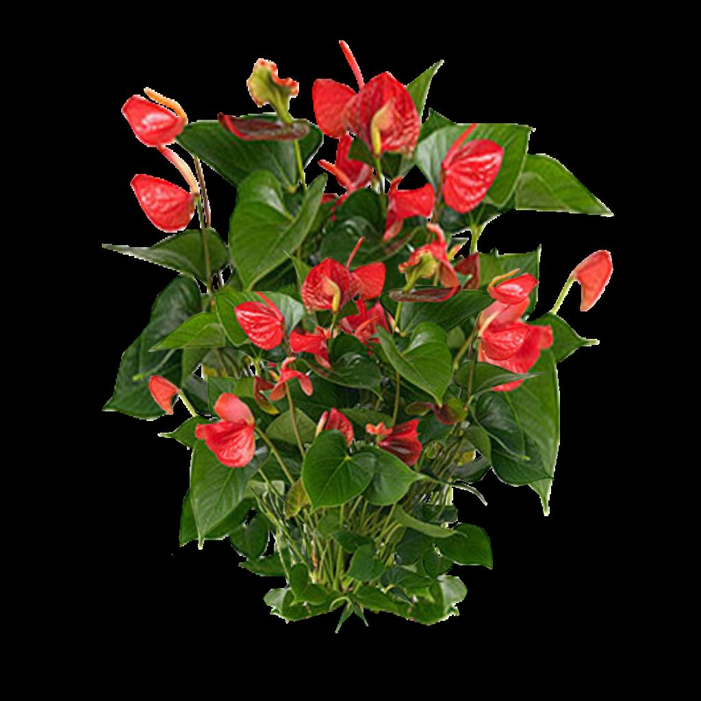 Best D Plant Design Software